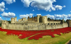 The Tower of London Poppy Exhibition. Picture:http://www.dailymail.co.uk/news/article-2716788/From-kiln-Tower-London-Dozens-British-artists-1million-ceramic-poppies-inspired-unknown-soldiers-account-blood-soaked-fields-Flanders-buy-one-25.html
